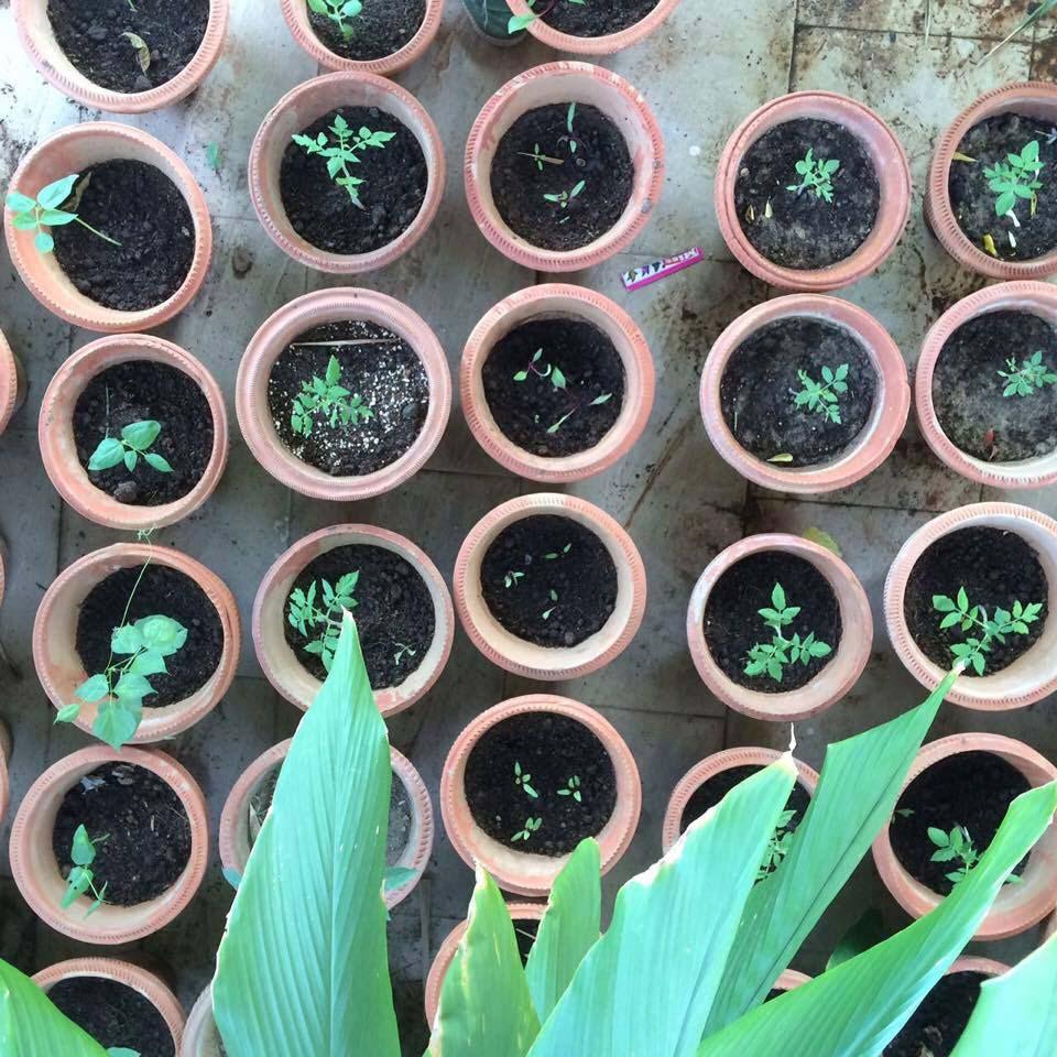 Joey's Garden 4